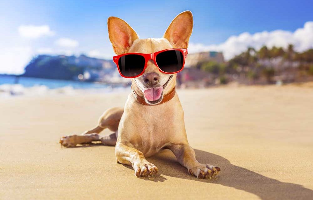 Dog-on-beach-with-sunglasses_ThinkstockPhotos-518565035-1000x641