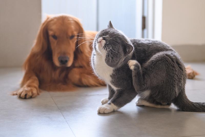 con l'arrivo della primavera è il momento di pensare ai trattamenti antiparassitari per cani e gatti