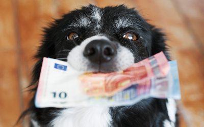 Tutte le novità per avere spese veterinarie detraibili