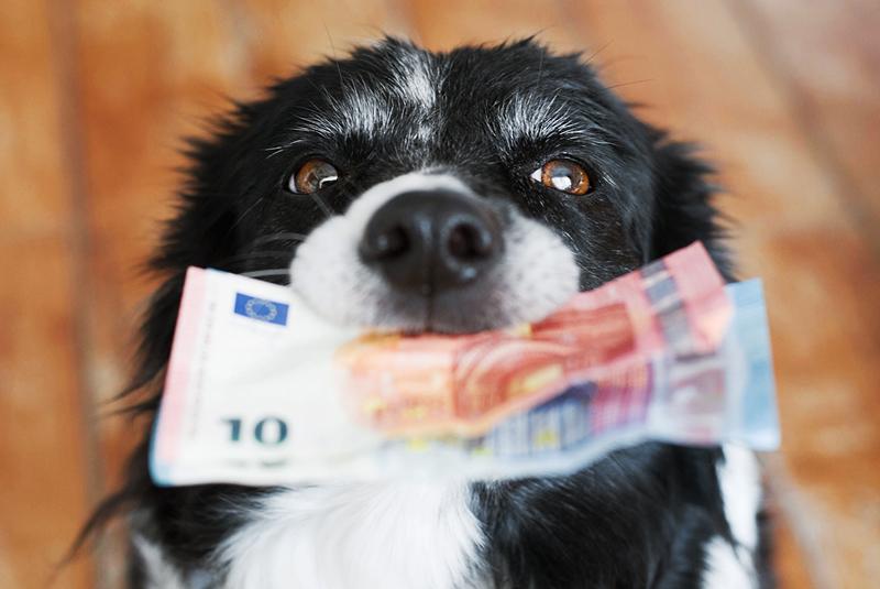 per ottenere le spese veterinarie detraibili dal 2020 è necessario avere pagamenti tracciati e dimostrare il possesso dell'animale