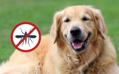 Malattie trasmesse dalle zanzare: quali sono e come evitarle