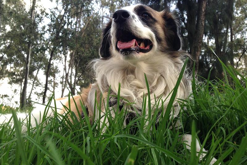 Le infezioni da zecca sono pericolose per il tuo cane?